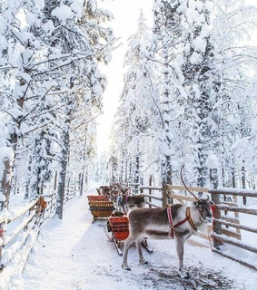 finland, christmas and lapland
