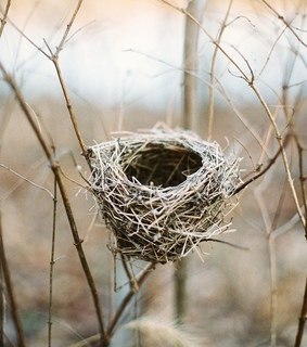 bird nest, branches and nature