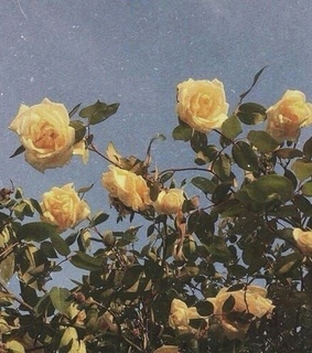 background, roses and retro