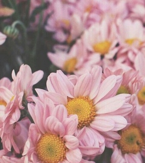 background, floral and pink flowers