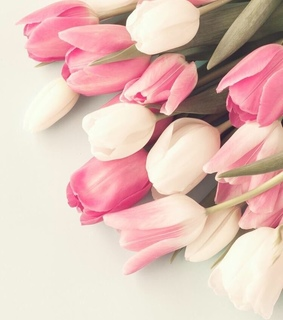 cute, white tulips and tulip