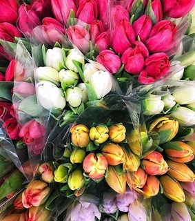 flowers, tulip and tulips