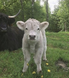 calf, family and green