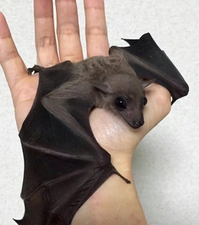 animals, bats and hand