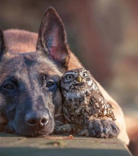 dogs, friends and owls