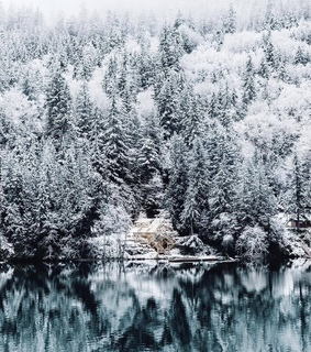 winter, forest and snowing