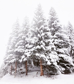 snowing, forest and landscape