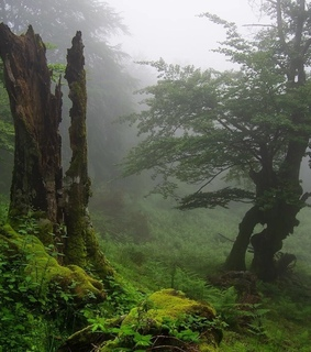 log, misty and trees