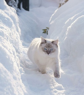 snowy, pet and trees