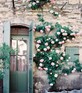 flowers, spring and roses