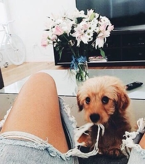 puppy, pets and adorable