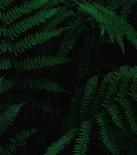 green, nature and ferns