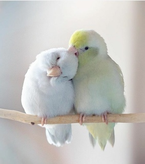 cute animals, feathers and birds