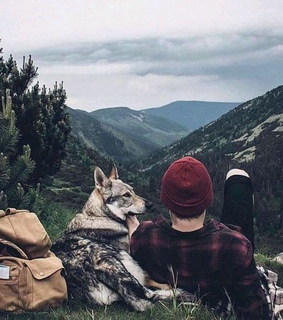 free, dog and wanderlust