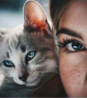 grey, chat and animaux