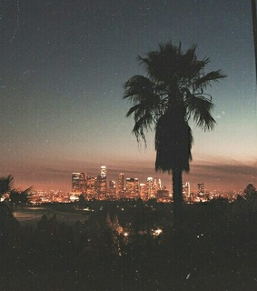 palmtree, photography and vintage