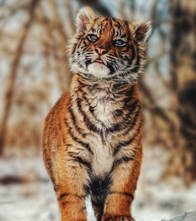 wallpaper, animals and animal lovers