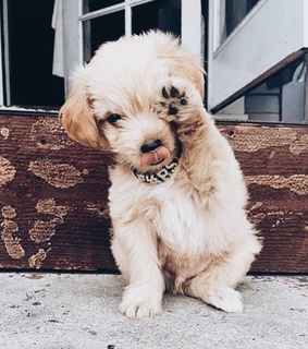 puppy, cute and dog