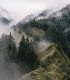 forest, travel and europe