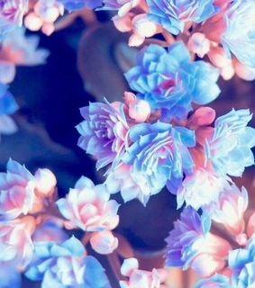 pretty, pinks and blues