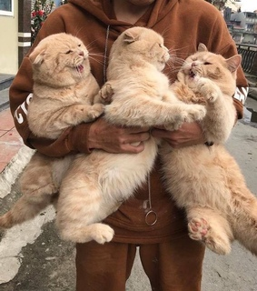 aesthetic, three and cute