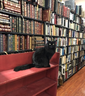 cat, bookstore and bookshop