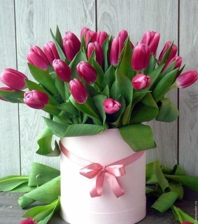 pink tulips, colors and lifestyle
