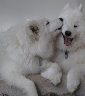 smile, fluffy and white