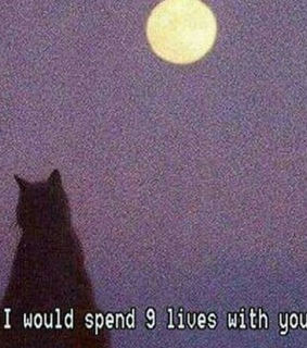 9 lives with you, black cats and under the moon