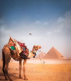 pyramids of egypt, camel and ancient civilization