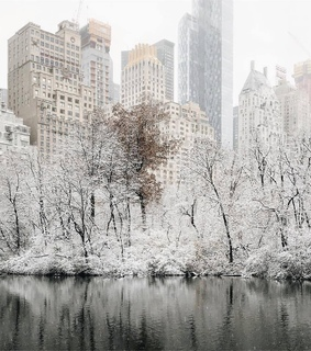nature, new york and snow