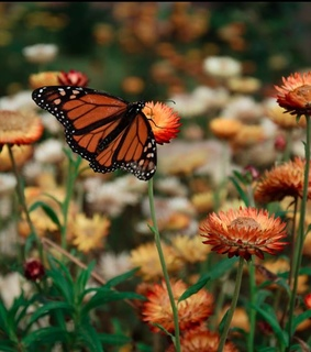flores, nature and mariposa