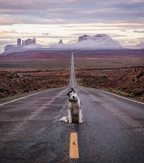 dogs, arizona and monument valley