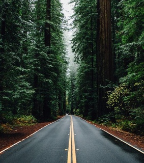 forest green, roadside and road trip
