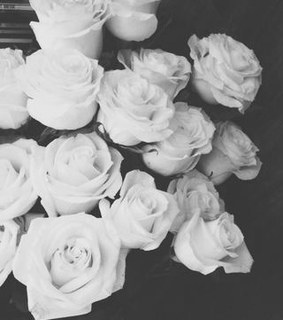black and white, flowers and rose