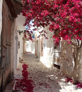 flowers, greece and pink