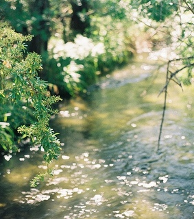stream, spring and green