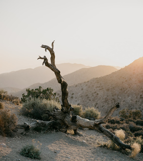 desert, original photography and horngry