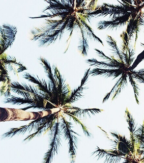trees, palms trees and beach life