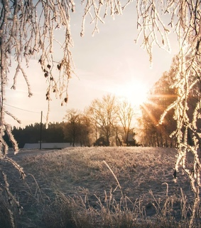 frost, nature and photo