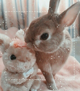 pink, soft and bunny