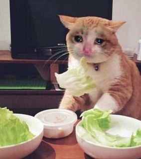sad cat, lettuce and reaction