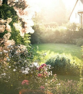 tumblr, spring and rose garden