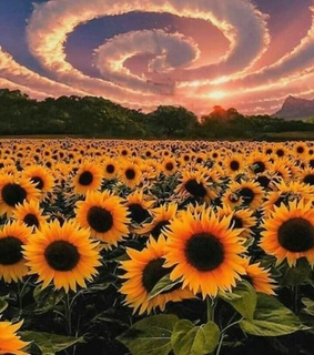 fondo, beatiful and girasol