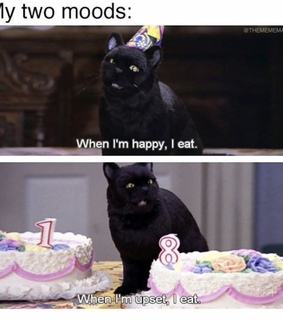cake, cat and food