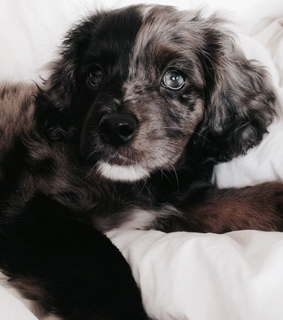 fur baby, blogger and we heart it