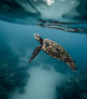 underwater, image and turtle