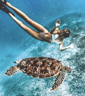 fff, turtle and tumblr