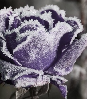 photography, purple and snow