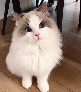 cats, cute and kitty